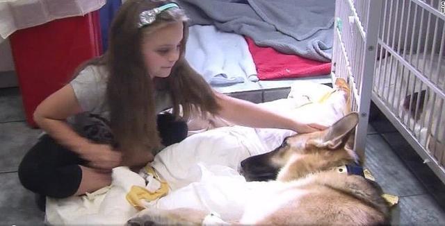 收养的狼犬一到新家初见小主人突然飞扑, 上前阻止时父母崩溃落泪