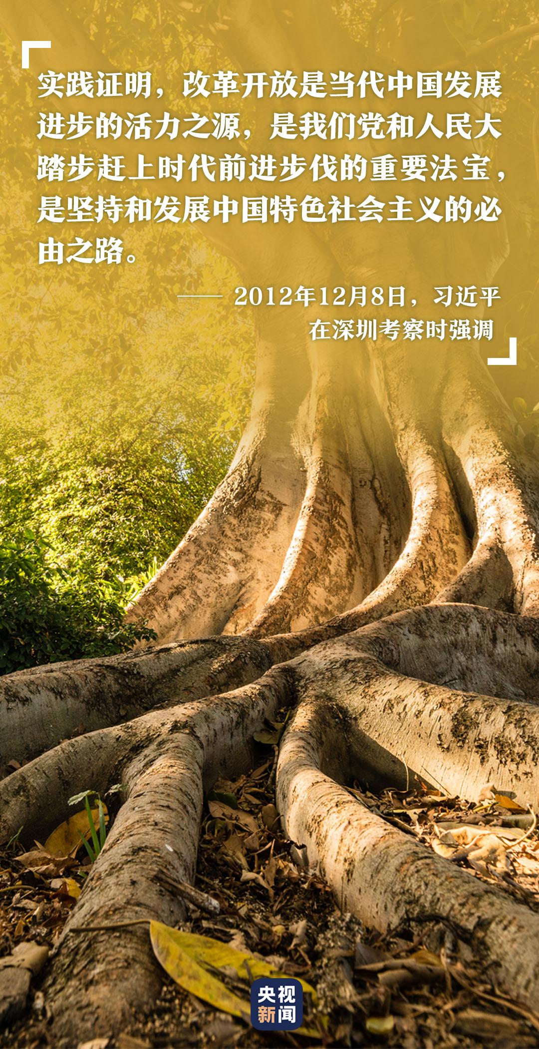 高山榕樹印初心-圖5