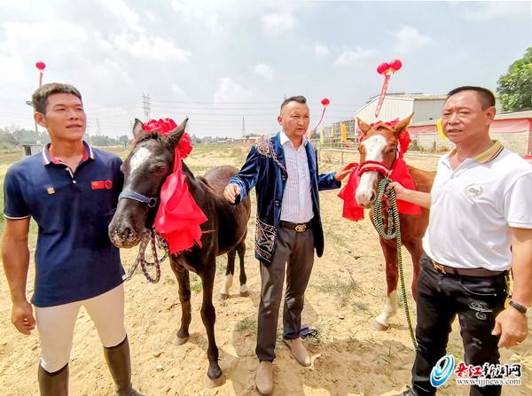 """""""见义勇为 民族团结""""捐赠仪式举行 两匹伊犁马"""