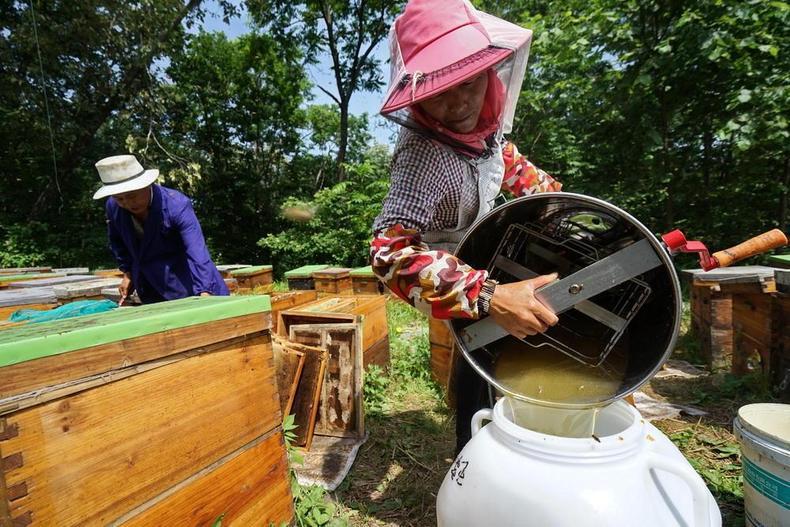 黑龙江畔养蜂人, 优质椴树蜜只卖十几元