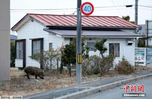 日媒: 受福岛核事故影响 日本核能经济规模大减
