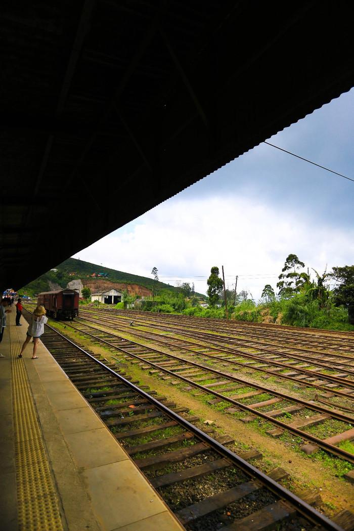 掛火車飛馳在高山茶園