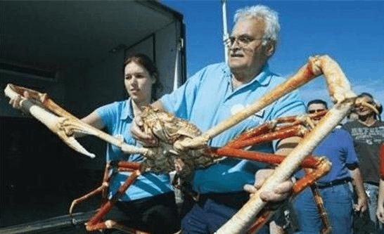 盘点动物世界十大巨型生物 非洲巨蛙世界第一