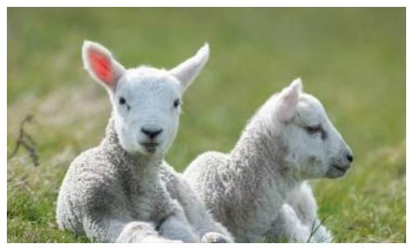 """羊羊羊羊羊: 10月28會發生""""地動山搖""""的大事件, 看看是怎麼回事-圖4"""
