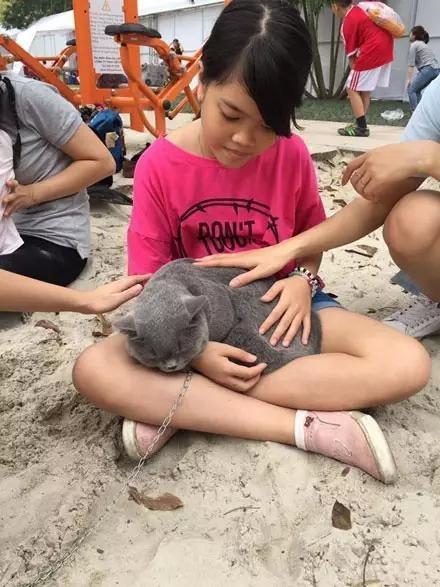 当猫咪遇上熊孩子, 虽然猫很乖, 但还是请不要这样玩。