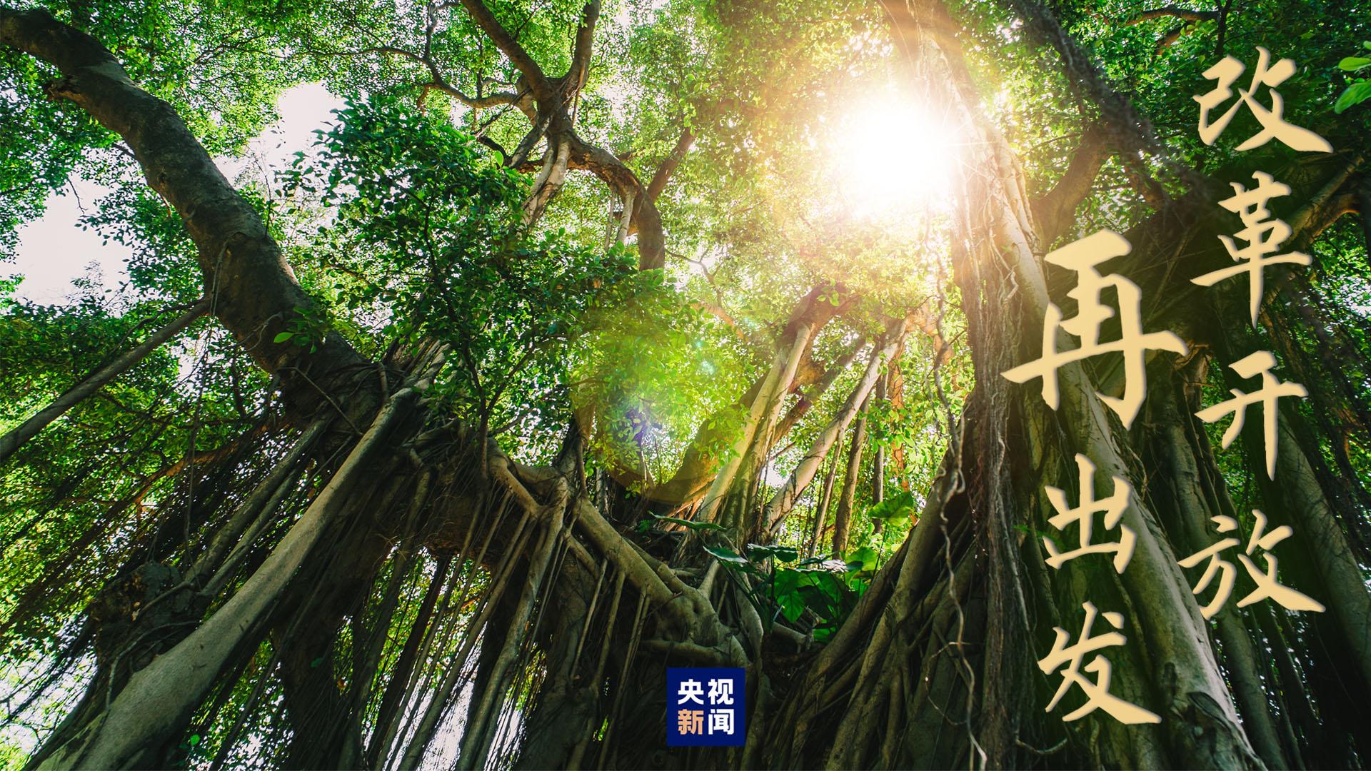 高山榕樹印初心-圖1
