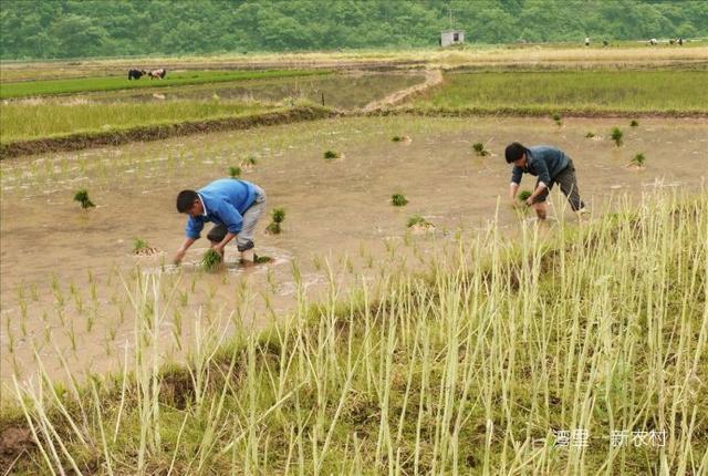 年轻人外出打工, 70岁老夫妻在家种田
