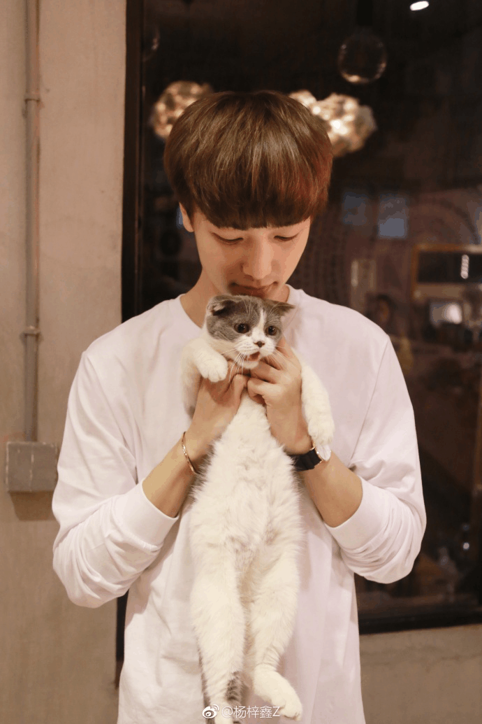 快乐男声小哥哥杨梓鑫, 非常喜欢猫, 一众迷妹看到又要尖叫了