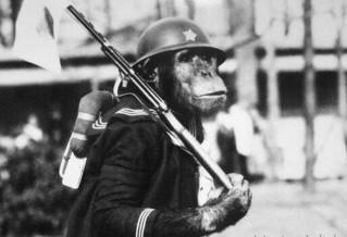 警示远离战争 日本大阪动物园每年展出战时黑猩猩军装照