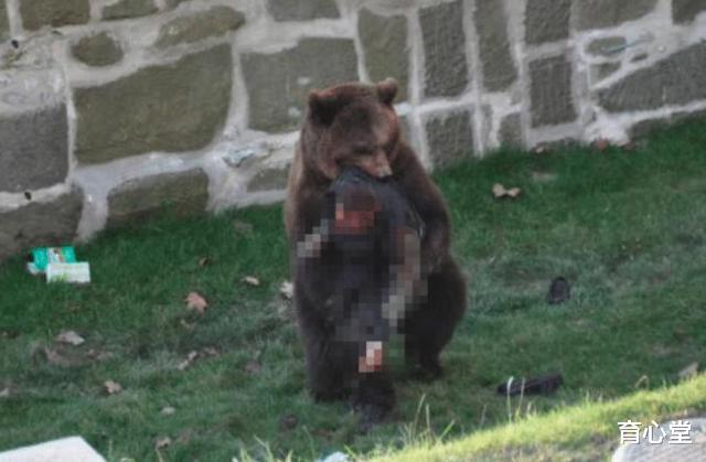 野性難馴! 動物園內棕熊撕咬飼養員隻剩骨頭, 場面令人悲痛-圖2