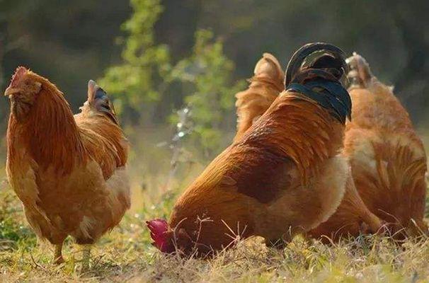 """雞雞雞: 10月18日將有""""痛哭流涕""""的大事件, 大師算的準得不行!-圖4"""