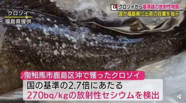 日本還要為排污詭辯嗎? 福島魚親自下海打臉瞭!-圖1